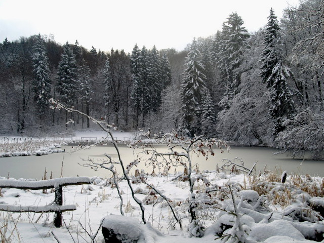 Holle-Teich im Winter